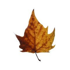 """Feuilles d'Automne"" (Christophe Taamourte) Tags: autumn france automne leaf arbre feuilles feuille argenteuil carr taamourte"