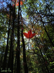 (Sarah-Vie) Tags: automne arbres forêt feuille img9736