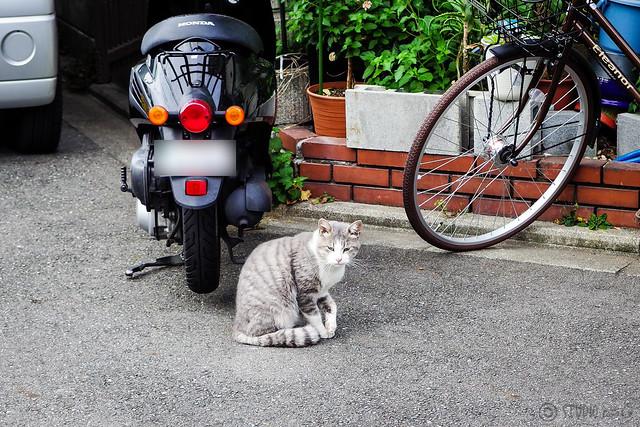 Today's Cat@2013-10-04