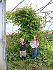 Polytunnel kids