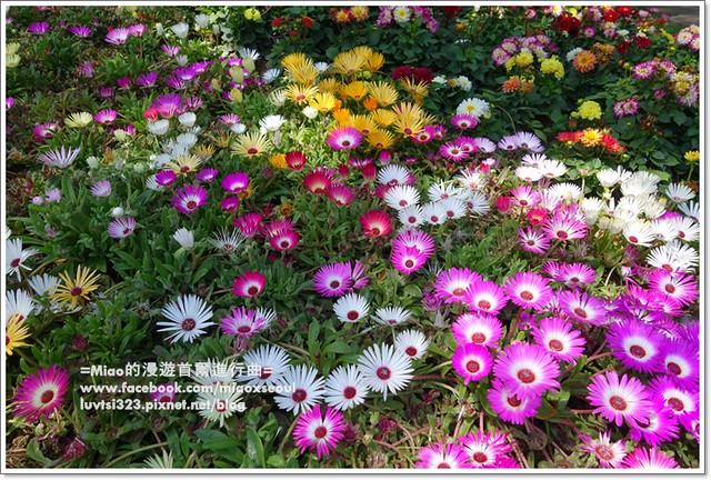 고양국제꽃박람회004