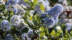 mai 2015 240 (toutenrando) Tags: nature marche chévres vivre marcher respirer randos mai2015