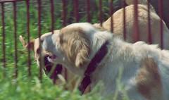 016 (Antunne's) Tags: cachorro ces brincando arleiaj