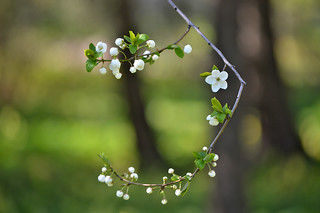 Spring - Beauty of Nature