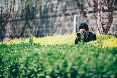 Les talents de camouflage du photographe (stephaneberla) Tags: china camera portrait people blackandwhite canon effects photography blackwhite gun photographer noiretblanc character beijing nb hide camouflage cannon activity fx chinois chine gens photographe effets mdc pkin cacher appareilphoto