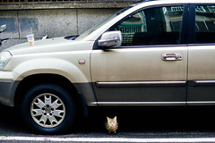 Small cutie on the road. [Explored] (_) Tags: cat sony meow   carlzeiss  a6000 carlzeisstouit1832 touit3218 e32mmf18
