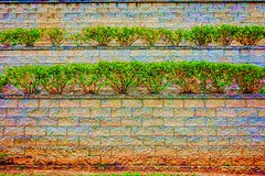 DSC_8550_313_2048p (RVDigitalBoy) Tags: green colors wall blocks bushes