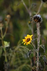 Flor Desierto (Checker Morgendorffer) Tags: chihuahua mexico desert wild menonitas amish cuauhtemoc manzanas carretera crossroads flowers flores invierno winter north photography class