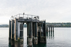 _DSC3139 (marilynwe) Tags: 2016 edmonds washington ferrylanding kingston sunrise water ferry