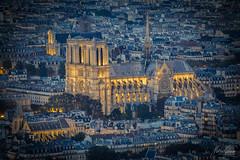 Cathdrale Notre Dame de Paris (MGness / urbexery.com) Tags: paris france frankreich notredame notre dame church kirche vierge window rose  lenfant mystre des cathdrales