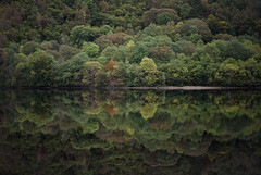 Autumn Colours (PeaStew) Tags: trees colours reflections lowlight landscape greens highlands nikon d810 mirror reflecting sunrise dawn moodcalm serene water shore bark tree