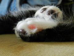 Jelly Beans (Alien Encounter) Tags: sleep sleepy kitty kitties kitten kittens fluffy soft nikon coolpix p500 animal animals feline