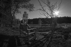 birkesø043 (Henrik DK-Photo) Tags: woods samyang8mmf35 fisheye friendlychallenges