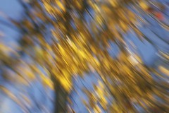 Fall colours (Jeannine St-Amour Photography) Tags: fall tree leafs reflection abstract yellow gold