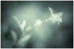 The part of it (Jaka Pirš Hanžič) Tags: nature depthoffield colour color desaturated focus light bright closeup bokeh growing plant spring mood garden leaves daylight sunlight shallow