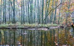 161030_0010 (larseriksfoto) Tags: autumn hst reflection spegling skralid sdersensnationalpark dmctz70 dmczs50
