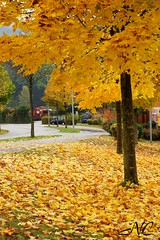 Fall in Germany (Nancleve) Tags: germany vacation houses buildings fall colour seelbach