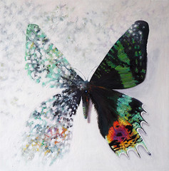 Reflection upon Life (Helen White Photography) Tags: madagascansunsetmoth butterfly wings irridescent multicoloured oiloncanvasart helenwhiteartist subject metaphor disolving materialising reflection glass philosophical