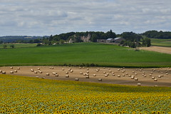 Paysage tricolores (Flikkersteph -4,000,000 views ,thank you!) Tags: countryside rural landscape nature summer beautiful fields clearsky champagneetfontaine prigord france
