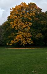 Colorful Tree (orellgarten) Tags: berlin tiergarten fall autumn herbst color colorful tree baum herbstfarben park gras wiese