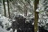 Pond Creek, 2016.11.20 (Aaron Glenn Campbell) Tags: mannygordon recreationsite pinchotstateforest thornhursttownship lackawannacounty nepa pennsylvania textures snowfall snow rhododendron pondcreek reflections wintry trees outdoors nature 3xp ±2ev macphun aurorahdr2017 google nikcollection sony a6000 ilce6000 mirrorless rokinon 12mmf2ncs wideangle primelens manualfocus emount