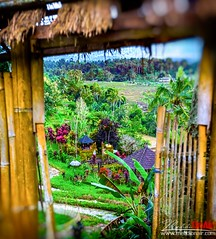 JetilawiRizfield2 (mehdinaoui) Tags: jatulawi indonesia wonderfulindonesia asia southeastasia garden rizfield nature bali baliisland island landscape east backpack backpacker backpackers travel adventure