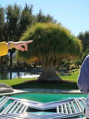 November 30, 2016 (40) (gaymay) Tags: california desert gay love riversidecounty coachellavalley sunnylandsestate ranchomirage point pointing