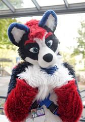 Eurofurence 2016 (Deeragon Entertainment) Tags: coltlan husky fursuit fursuiter fursuiting furry ef22 eurofurence 2016