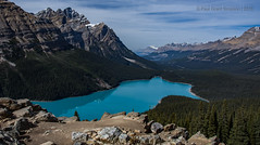 If Carlsberg did views... (pauls1502) Tags: peytolake banffnationalpark icefieldparkways canada canadianrockies mountains landscape lakes forest