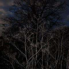 TERRA INCOGNITA (Grant Simon Rogers) Tags: grantsimonrogers ƒ fujifilmx100t flasher flashefx20 flashing flânerie flâneur london burgesspark southlondon se5 camberwell walworth southwark abercrombieplan greaterlondon england englandshire december2016 advent flickr animamundi antiwarphotography individuation daylightwithflash terraincognita thefirst10000 artistphotographers colour themanwhoflashedattrees therepublicofheaven theshamanicphotographer sooc straightoutofthecamera