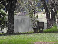 DSCN0339 (apacheizabel) Tags: lago pssaros rvores cu pinhas tronco espelho dgua queroquero rolinhas banco no bosque famlia de galinhas passeio parque centro aeroespacial da aeronutica cta so jos dos campos sp