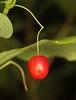 berry (Lynette MT) Tags: revettlake idaho august thompsonpass berry