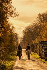 The sunny ride in the cold fall (#explore 20-11-2016) (marielledevalk) Tags: outdoor fall autumn horses ride nature people wood forest sun season holland dutch landscape