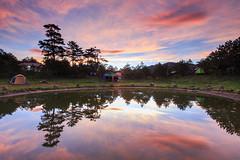 (samyaoo) Tags:            autumn taiwan fushoushan farm maple momiji red leaf taichung bokeh           camping camp tree pool sunrise refrection fire cloud tent