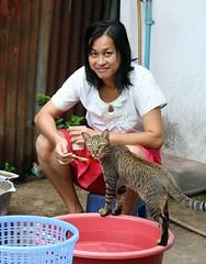 spoon feeding her cat (the foreign photographer - ) Tags: lady spoon feeding tabby cat khlong thanon portraits bangkhen bangkok thailand canon kiss 400d