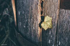 untitled (1 of 1).jpg (nhulz) Tags: autmn november ohio fall cottage