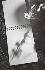 000035 (Shota Kotake) Tags: nikon nikonu nikonn65 n65 filmcamera kodak kodaktx400 tx400 blackandwhite 35mm 35mmfilm stilllife flower rose neputunas