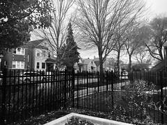 Walking Into a Corner. (kathyreyes417) Tags: monochrome black tone tonal noir corner street branches trees blackandwhite