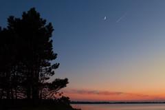 Nigthtingale and planes (Jakob Arnholtz) Tags: ordrupns arnholtz denmark danmark solnedgang sunset spring forr silhouette fyrretr