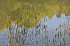 Reflets (dfromonteil) Tags: water eau lac lake grass herbe nature lumière light