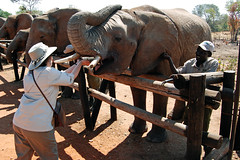 Victoria Falls_2012 05 24_1662 (HBarrison) Tags: africa hbarrison harveybarrison tauck victoriafalls zimbabwe zambeziriver mosioatunya