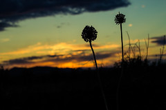 a new sunset (lord_yomismo) Tags: sunset backlight contraluz puestadesol sombras