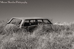 Long Gone (maizydaizy) Tags: blackandwhite texture abandoned car rust grasses