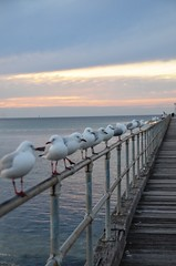 Mornington Peninsula (suzi-jay) Tags: ocean sunset sky water birds clouds reflections evening pier wings sand seagull beak feathers wharf mornington railings peninsular