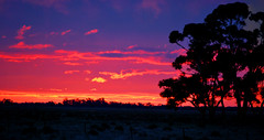 Sunset_Jerilderie_NSW_June 2013_DSC_0607_stitch_2 (renrut01) Tags: trees sunset silhouette newsouthwales jerilderie