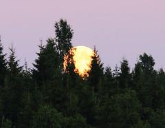 Super Moon at Lake Keskinen_2013_06_24_0032m1 (5) (FarmerJohnn) Tags: cloud moon lake reflection water night clouds canon suomi finland may super calm silence midnight moonlight vesi kuu y laukaa jrvi pilvi junemoon keskuu keskinen tyyni keskiy kuutamo valkola vedenpinta hiljaisuus ef7020040lisusm lakesurface canon7d supermoon heijatus anttospohja superkuu juhanianttonen supermoon23th24thjune2013