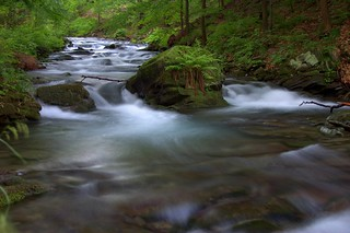 Velvet Water