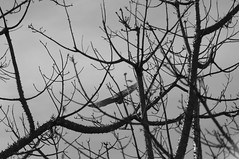 130706_Caminho da Fé 2013_068.jpg (Luiz Henrique Rocha Rodrigues) Tags: caminheiro ave bird green pájaro pássaro fauna caminhodafe caminhodafe2013 pb arvore verde vegetal caminhada aaa©luizhenriquerocharodrigues flora