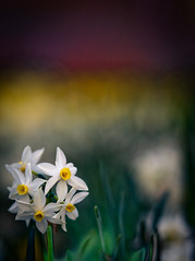 """1st day of Spring • <a style=""""font-size:0.8em;"""" href=""""http://www.flickr.com/photos/44919156@N00/9653101129/"""" target=""""_blank"""">View on Flickr</a>"""