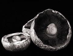 flat mushrooms (lesbru) Tags: stilllife mushrooms interior naturallight d600